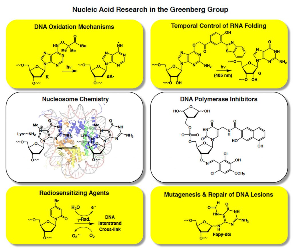 Images of DNA and RNA representing research in the Greenberg Group
