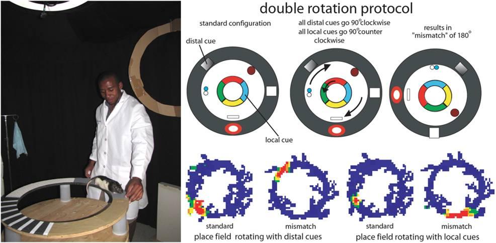 double rotation protocol