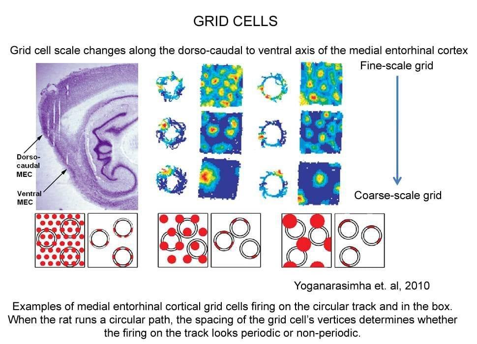 grid cells