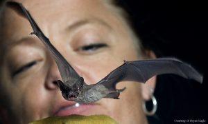 Dr. Bohn working with a bat