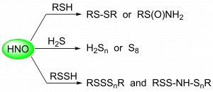 Sulfur based reaction products derived from the reaction of HNO with different reactive sulfur species
